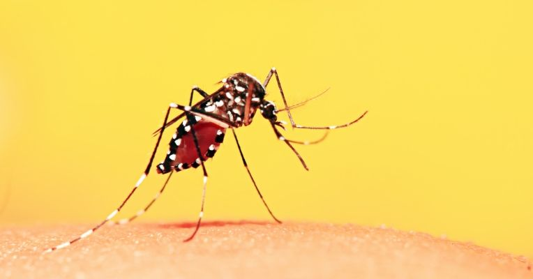 Febre amarela volta a chamar atenção da população
