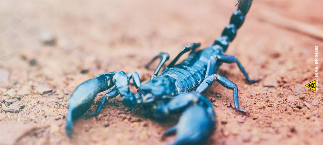Infestação de escorpiões causa alerta